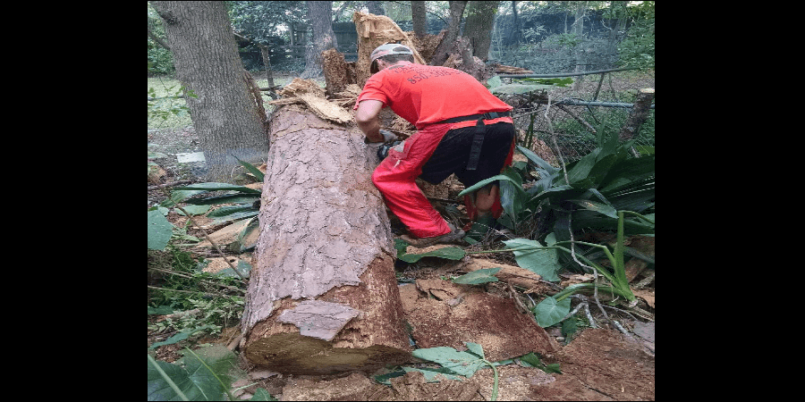 Tallahassee Tree Removal Services