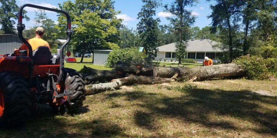 Tallahassee Tree Services